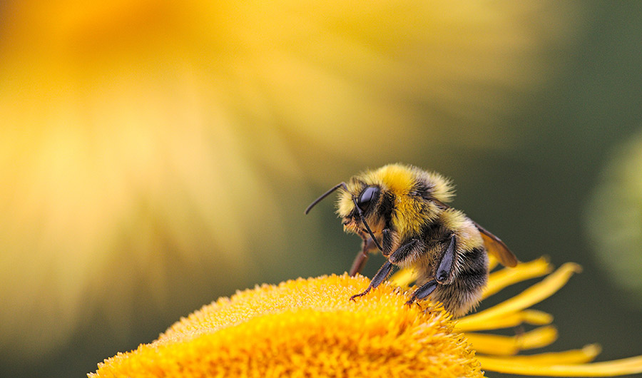 Pollen-Sized Pills Promise to Protect Bees Exposed to Pesticides