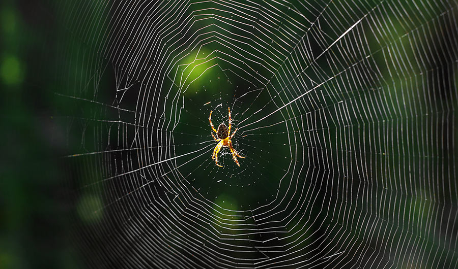 Eensy Weensy Spider Silk Takes the Temperature of a Single Cell