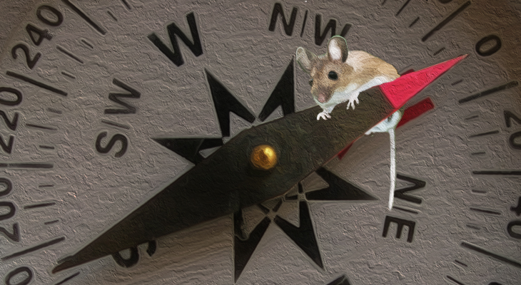 Of Mice And Magnets   Inside Science