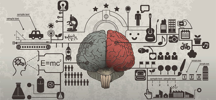 emotions and the brain essay Researchers believe that the frontal lobes and the amygdala are among the most important brain structures affecting emotions feelings of happiness and pleasure are.