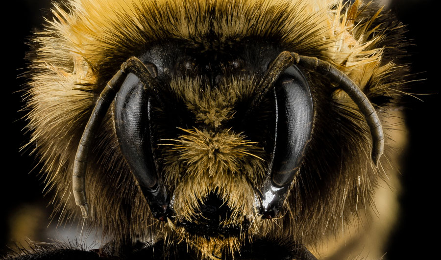 how the bees you know are killing the bees you don t inside science