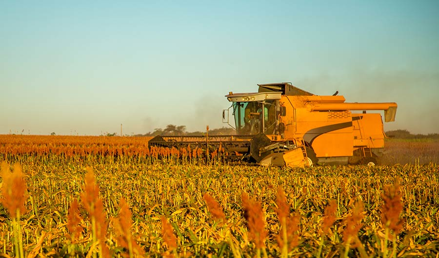 Microbes in Soil Help Sorghum Stay Strong Against Droughts   Inside