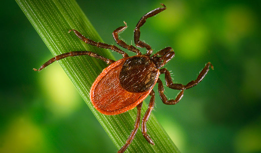 BRIEF: People Mailed 16,000 Ticks to Track Lyme Disease and Other Illnesses