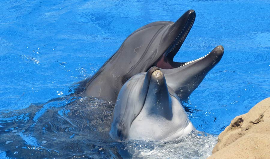 Research Suggests Dolphin Clitorises Are Like Human Clitorises, But Better Placed