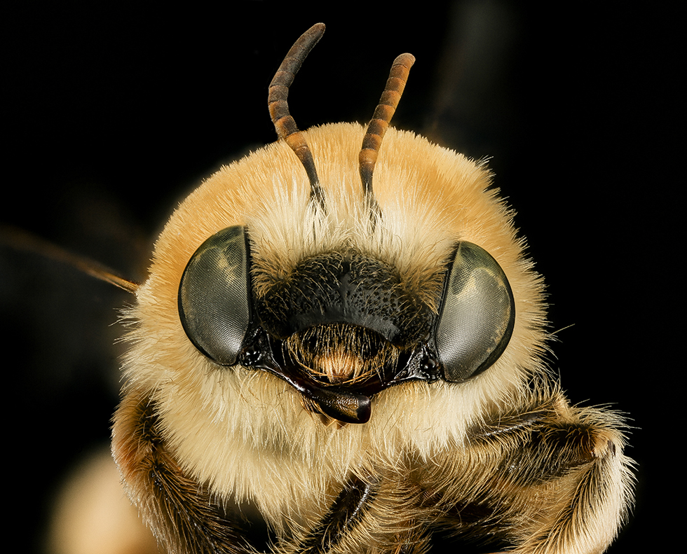 Slideshow: The Dazzling Diversity of Bees | Inside Science