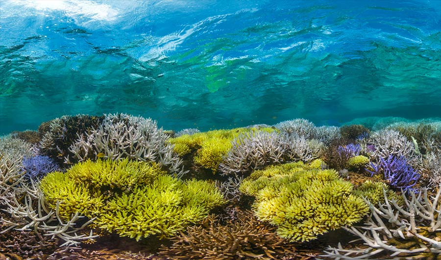 coral bleaching articles