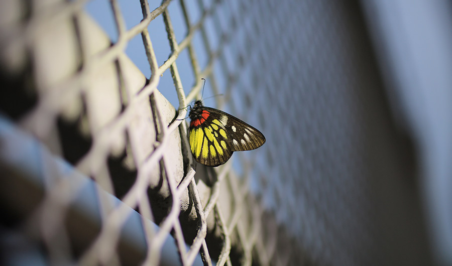 Yellow, orange and black butterfly stationary on a vertical fence