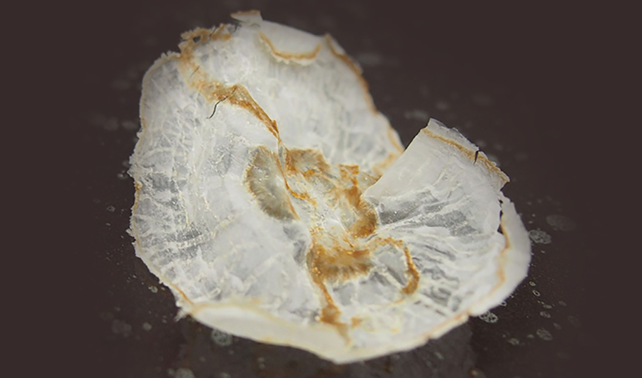 Image of a jellyfish chip, mostly translucent, on a black background