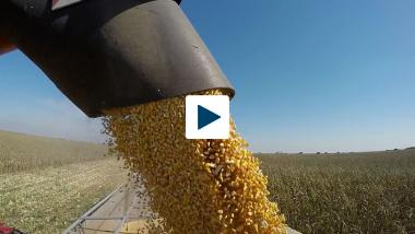 Corn Kernels Could Make Better Biofuels