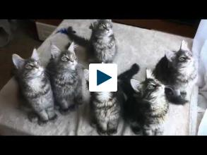 Why You Should Watch Cat Videos at Work
