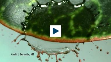 Making A Splash -- High-speed video shows how far one drop of water really goes.