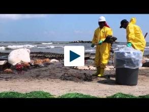 Nature-Inspired Material Cleans Up Oil Spills