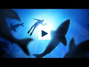 Shark Tales: Sorting Fact From Fiction