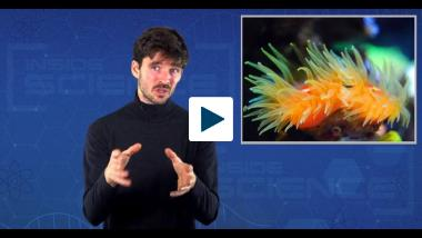 Loud BirdsExotic Animal Encounters, Suffering Coral Reefs and Pureed Potatoes!