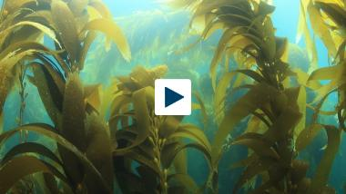 Is Seaweed America's Next Cash Crop?