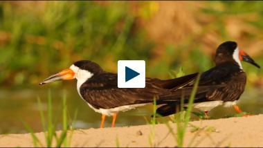 Grooves On A Bird's Beak Help It Fly Faster