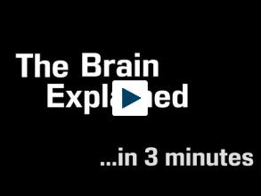 How Your Brain Work In 3 Minutes