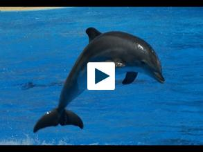 Why A Bottlenose Dolphin's Indirect Aim is Really Right on Target