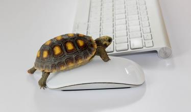 Web-surfing turtle