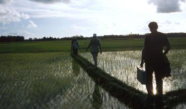 Four researchers walking through a paddy.