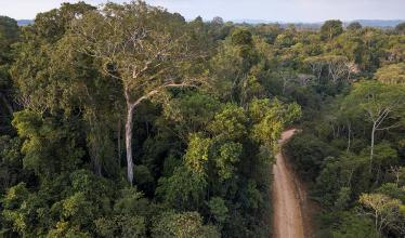 Image shows a verdant forest, with a dirt road running from the bottom to top of the frame.