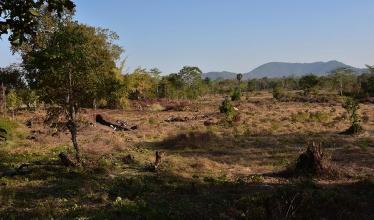Landscape image shows an archaeological site amid a mix of trees and grass, with a mountain in the background.