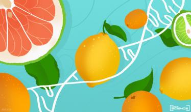 The bright colors of a variety of citrus fruits, including lemons, limes and other tart fruits fill the foreground of the image. The background includes white lines of the DNA double helix.