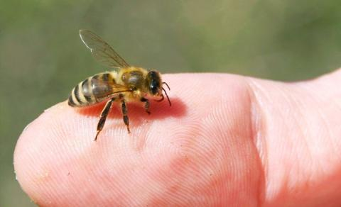 How the Bees You Know are Killing the Bees You Don't